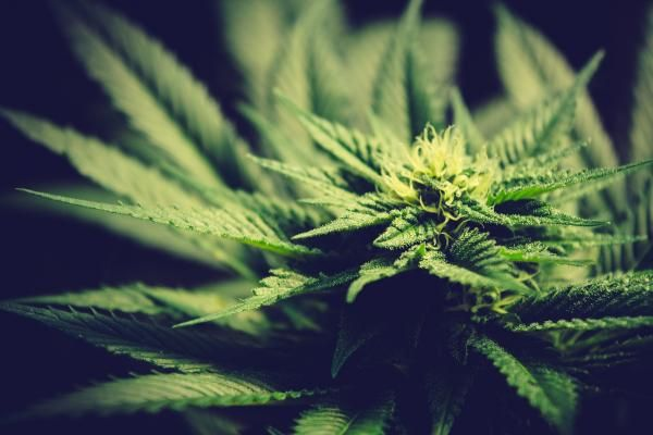 Top 10 Marijuana And Psychedelic Stock News Stories Of The Week